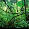 L'esploratore nella giungla 2